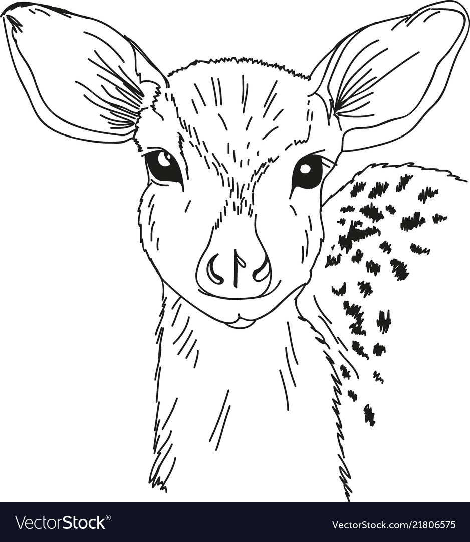 Head deer drawn contour black coloring