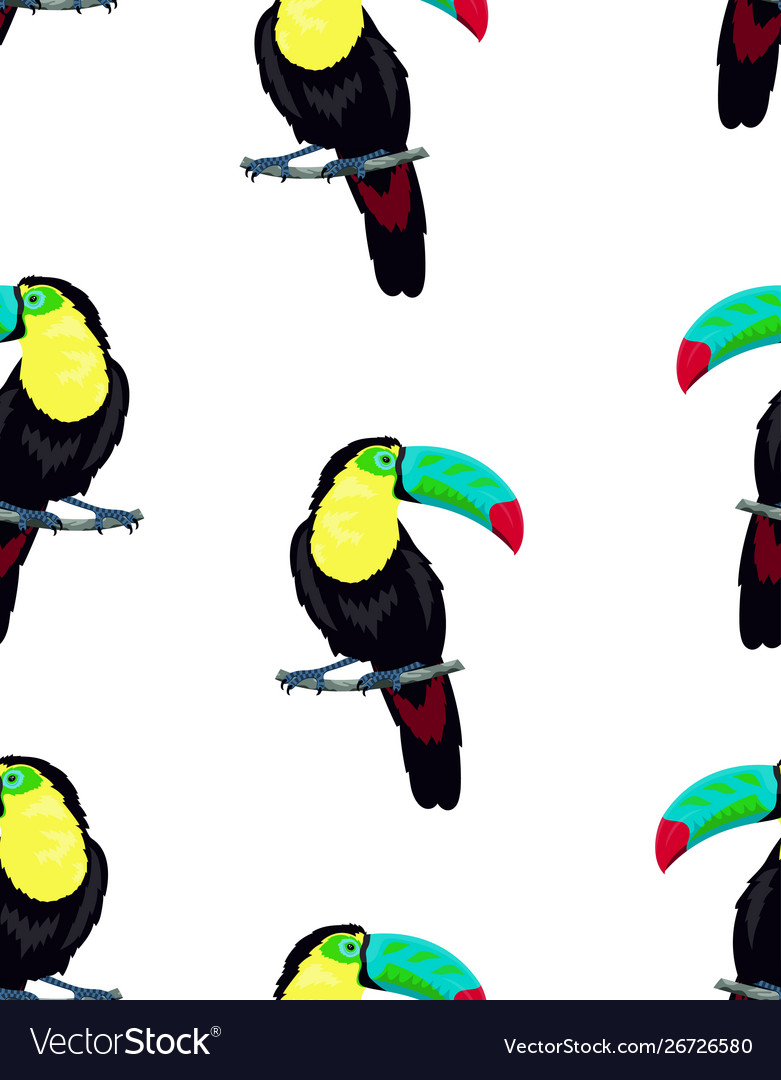 Pattern with toucan on white background