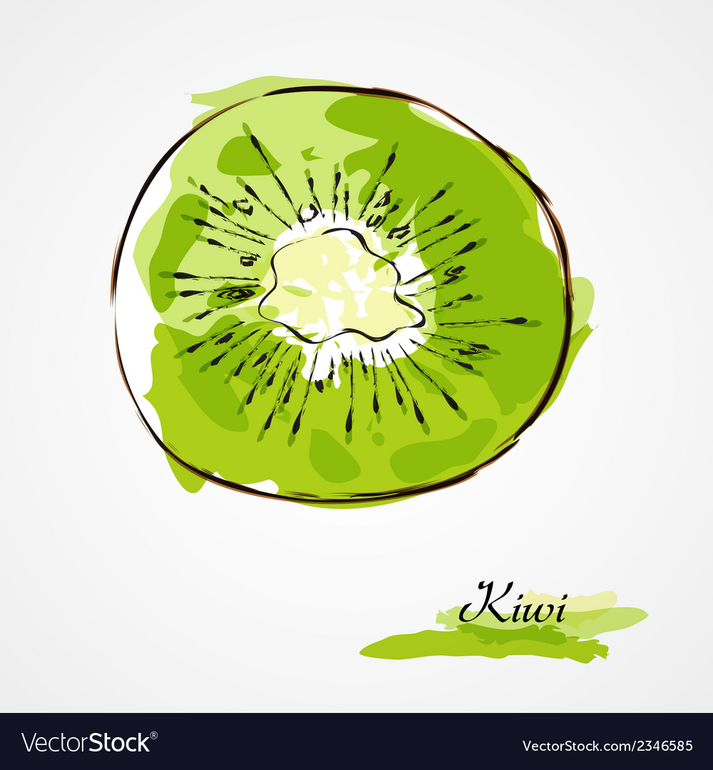 Kiwi fruit slice vector image
