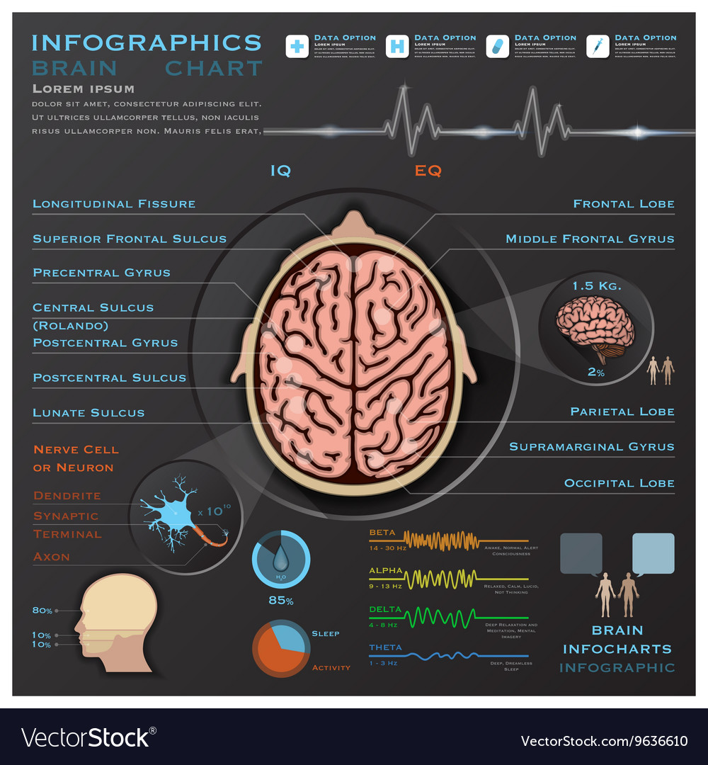 Brain And Nervous System Medical Infographic
