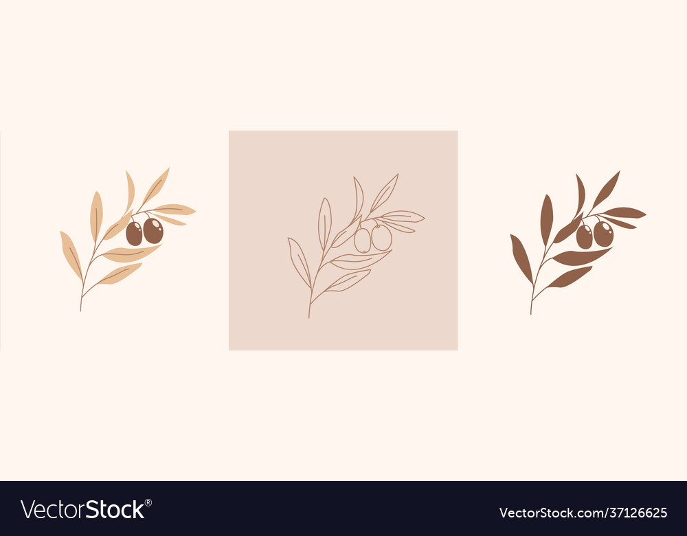 Set modern abstract aesthetic olive branch