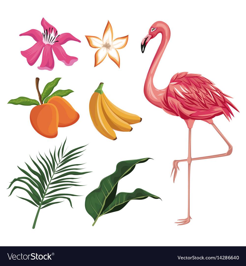 Flamingo mango banana flower leaves nature