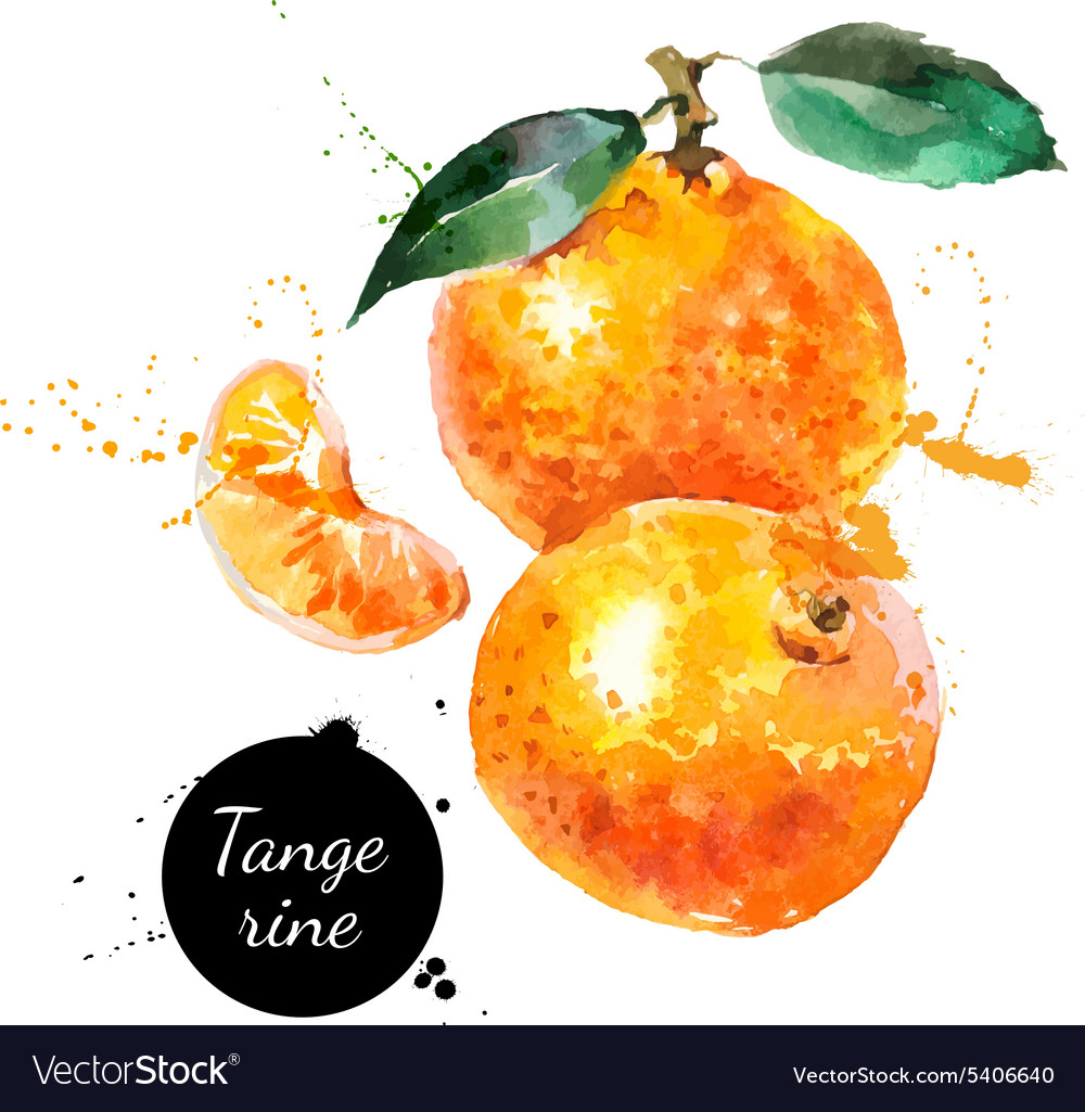 Hand drawn watercolor painting tangerine on white