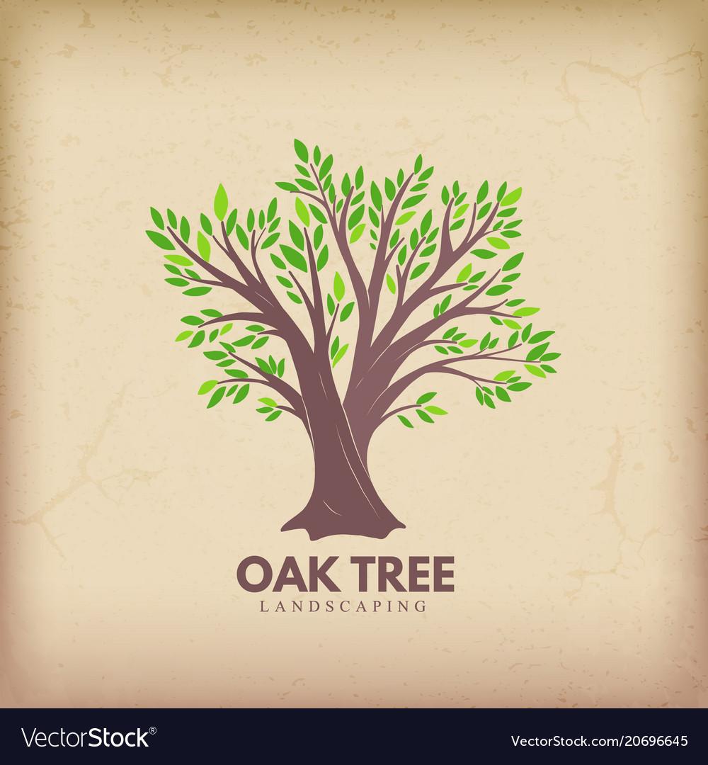 Oak beautiful tree vector image