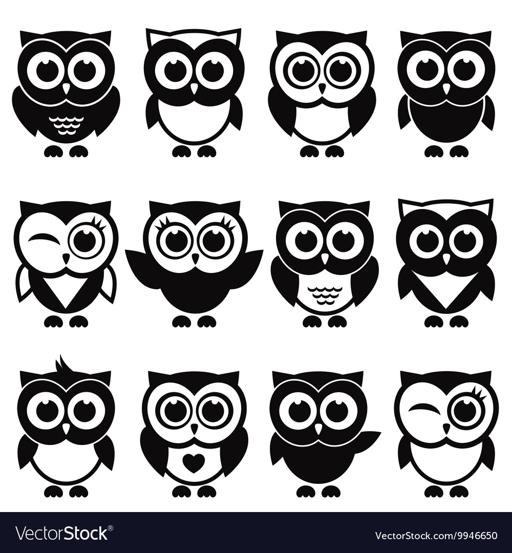 Funny black and white owls and owlets
