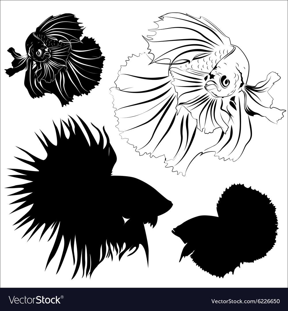 Siamese fighting fish vector image