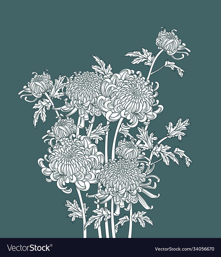 Japanese flower chrysanthemum outline art