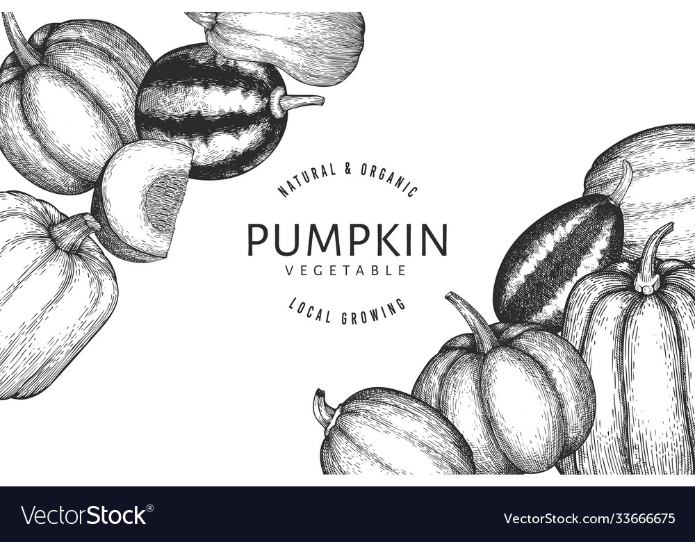Pumpkin design template hand drawn thanksgiving vector