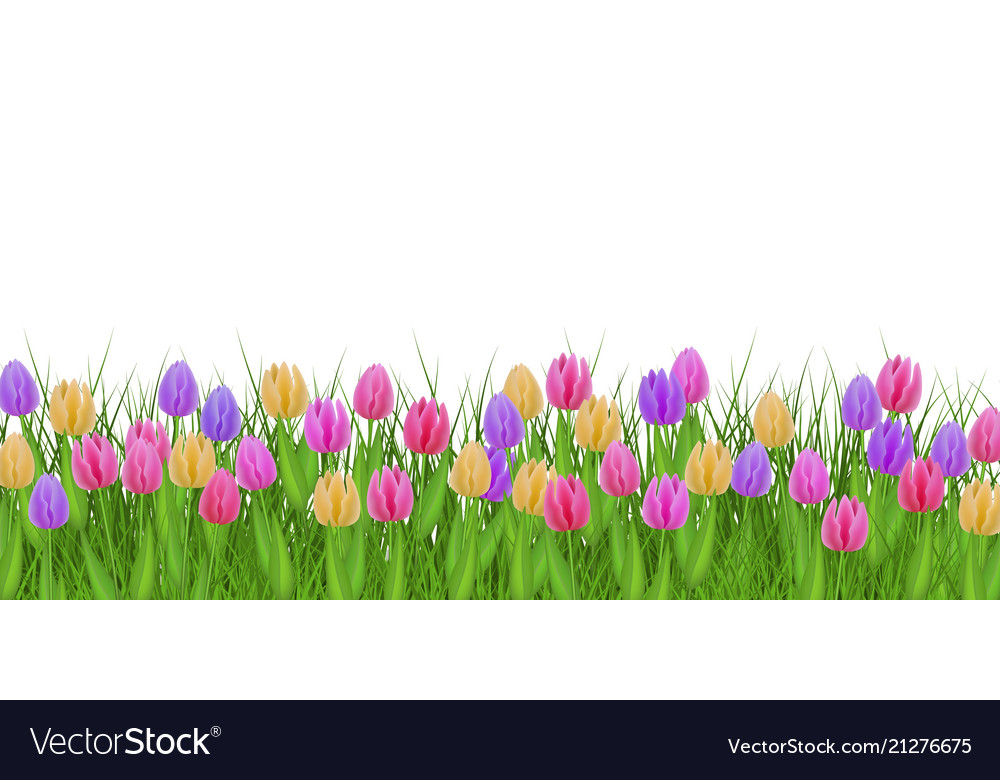 Spring floral border with colorful tulips on fresh