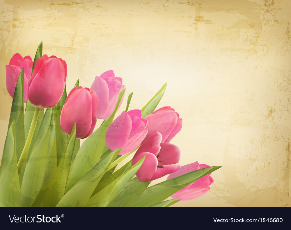 Valentines day background beautiful tulip flowers vector image izmirmasajfo