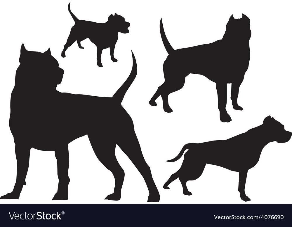 Amstaff silhouette logo vector image