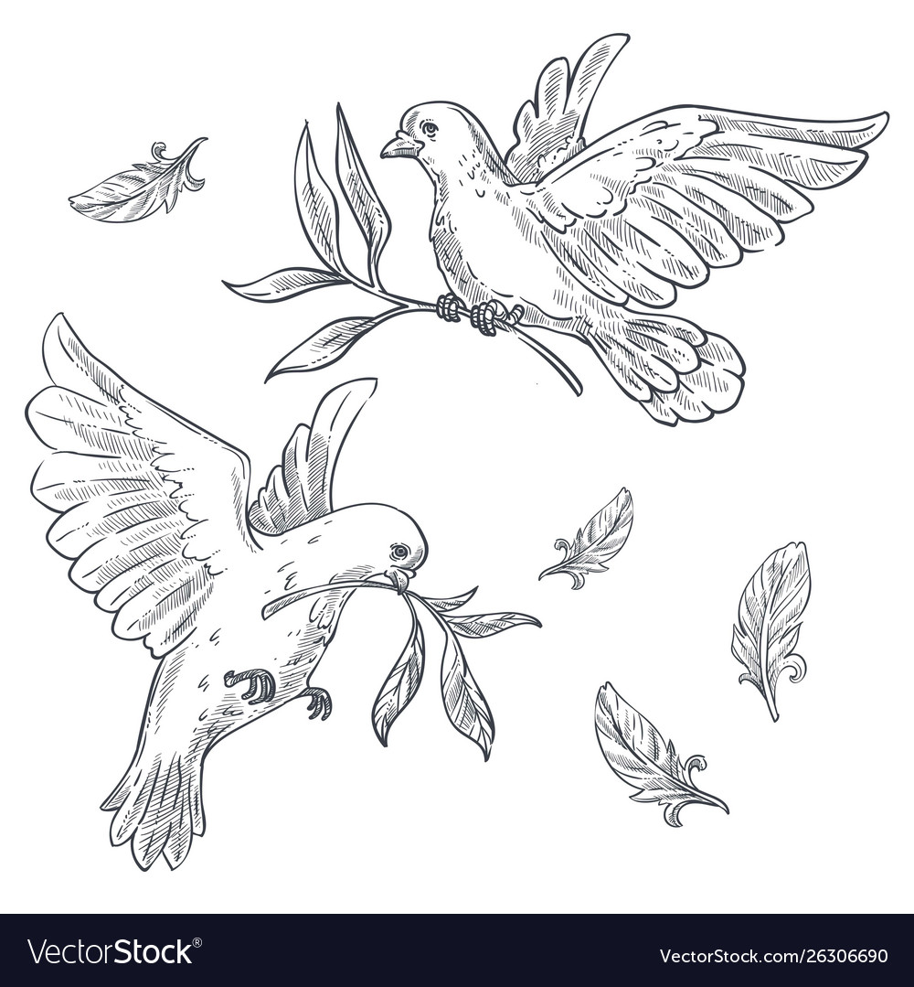 Doves Or Pigeons With Olive Branch Or Twig In Beak