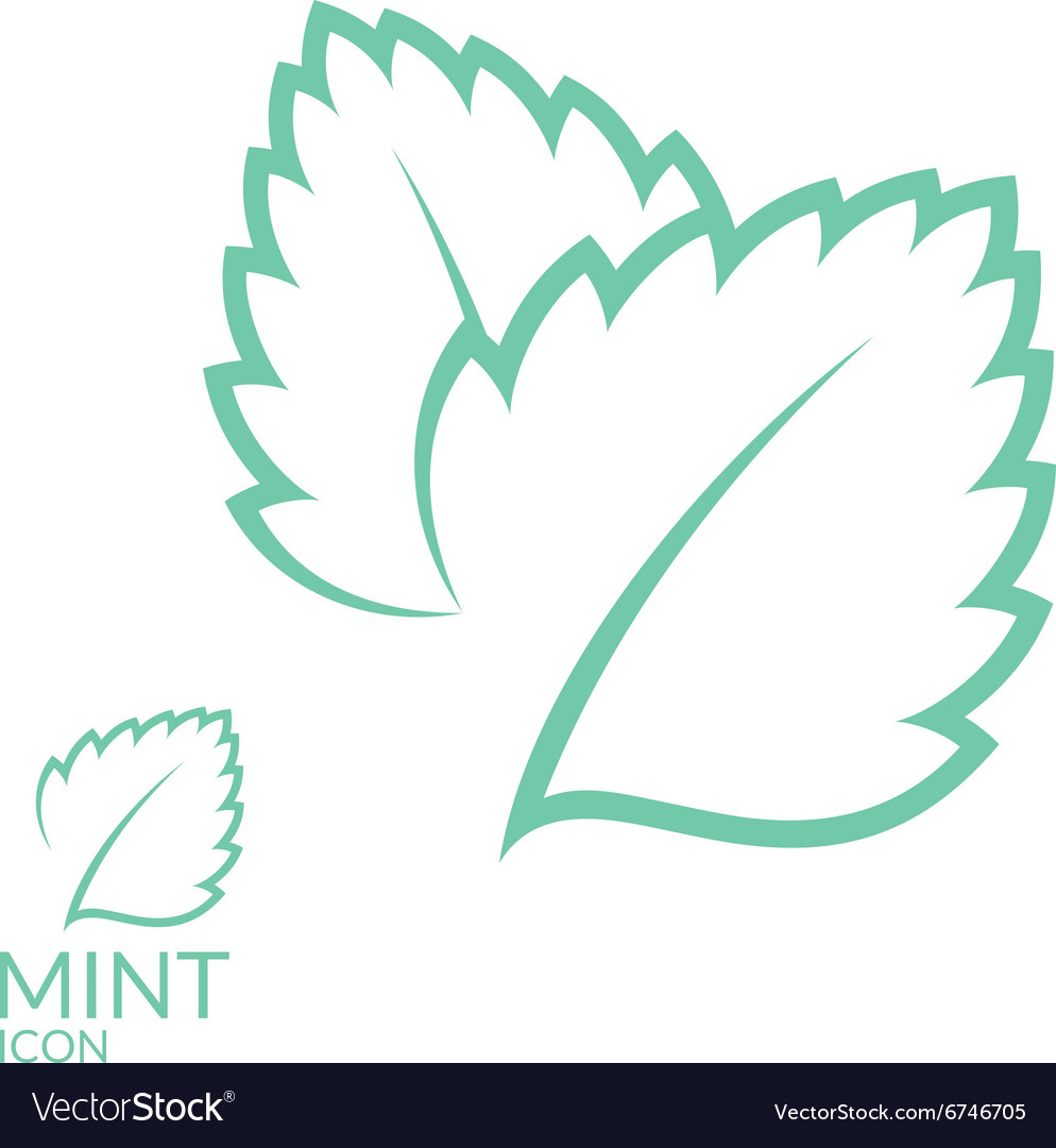 Mint Icon set Isolated leaves on white