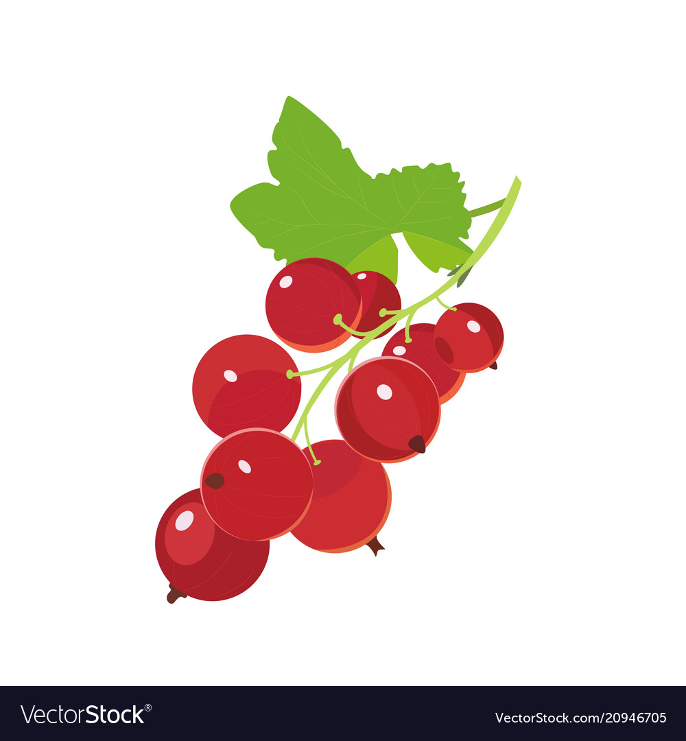 Red currants icon berry in cartoon style