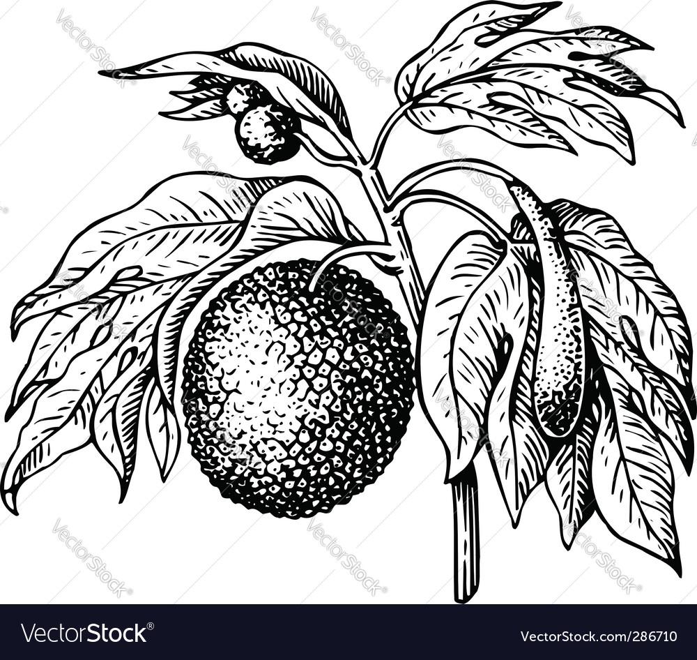 Art carpus bread fruit tree