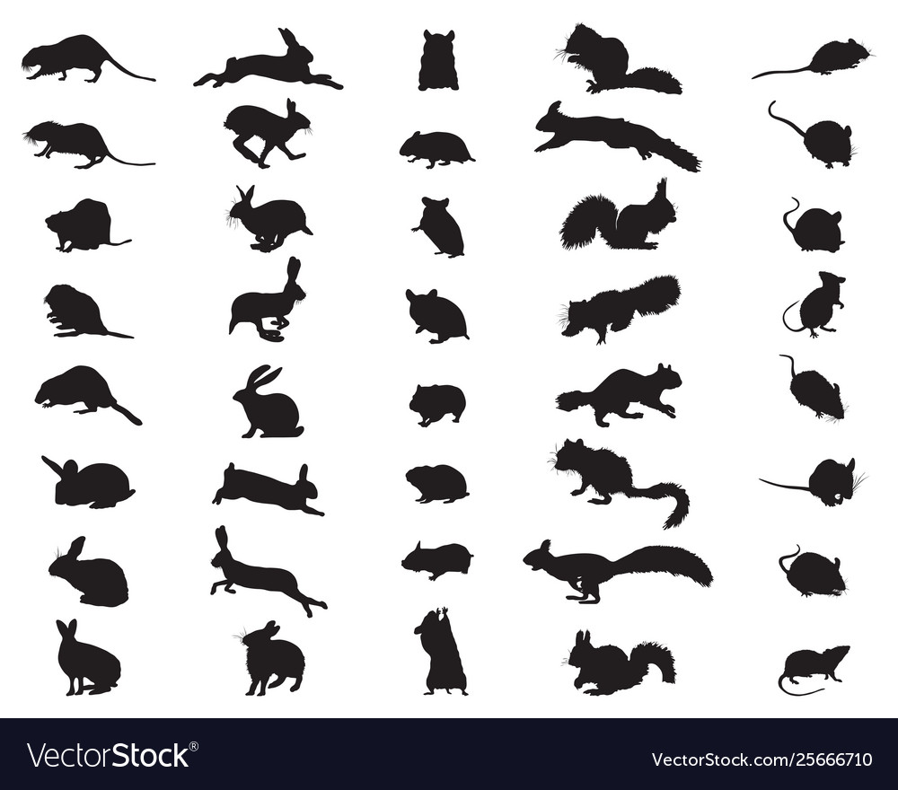 Silhouettes rodents