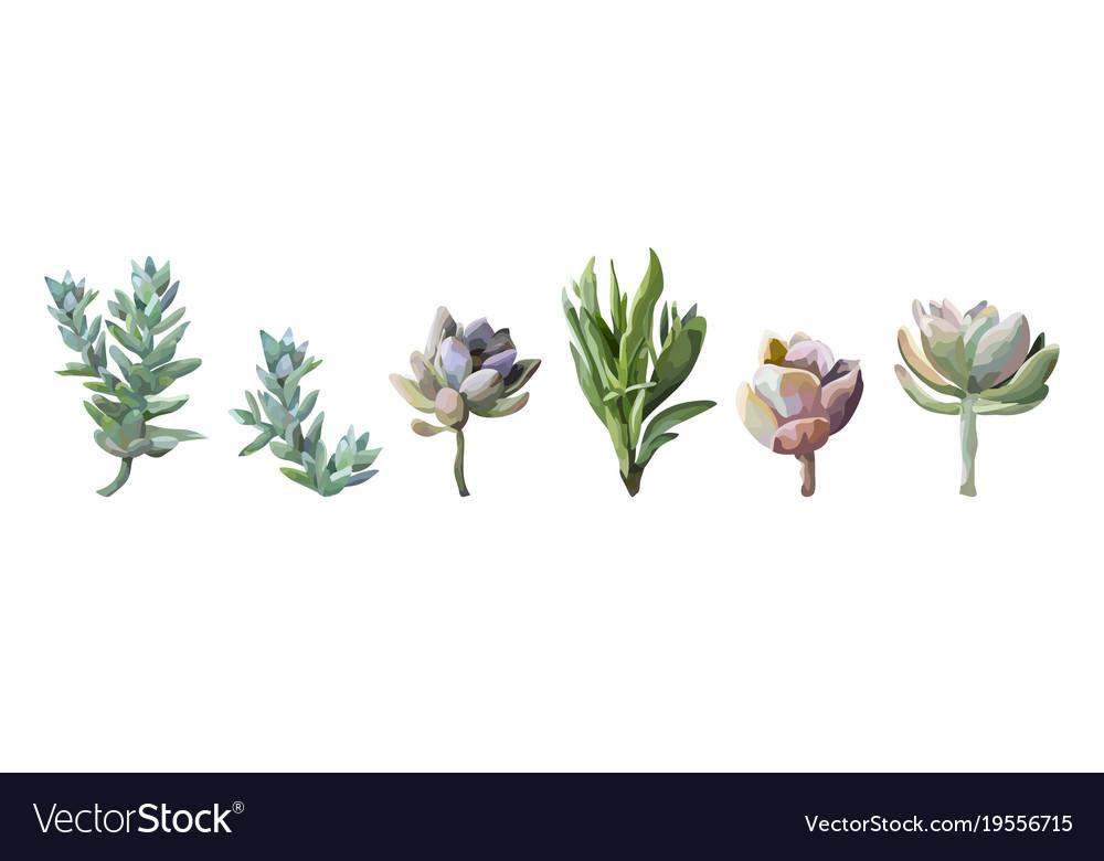 Succulent cactus plant watercolor elements set