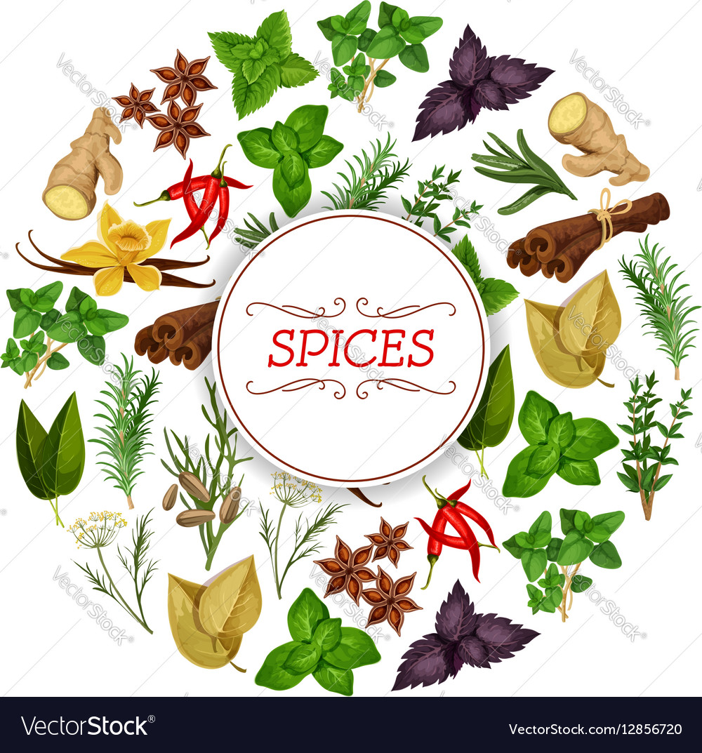 Banner for seasoning herb or spice food