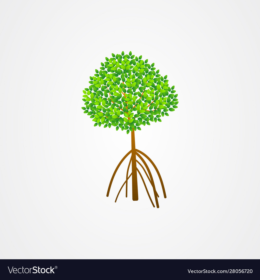 tree and roots mangrove tree mangrove plant vector image vectorstock