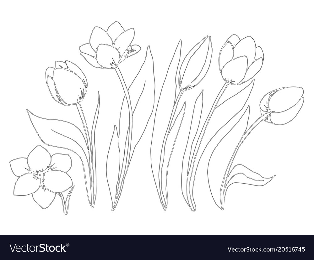 23+ Inspired Photo of Tulip Coloring Pages - birijus.com | 830x1000