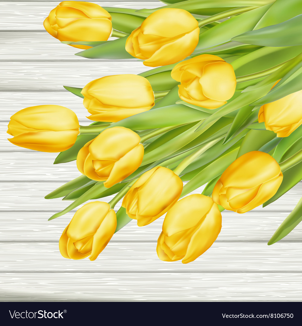 Fresh yellow tulips on wooden background EPS 10