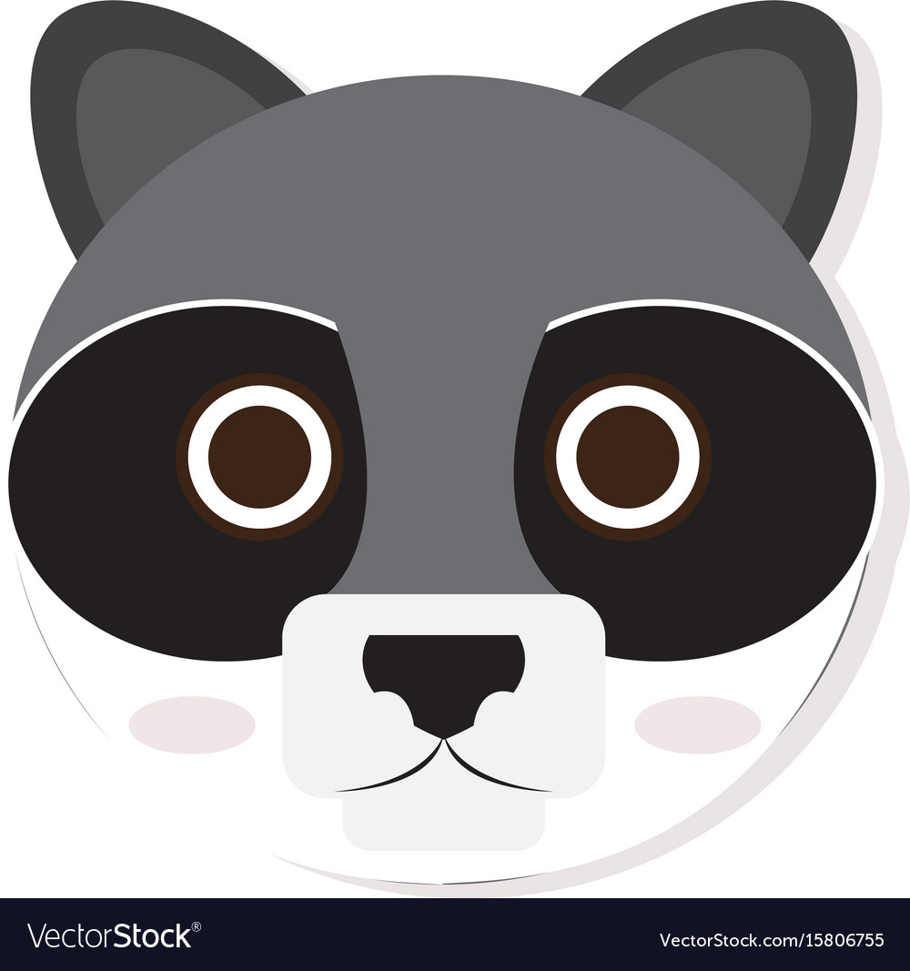 Isolated racoon face