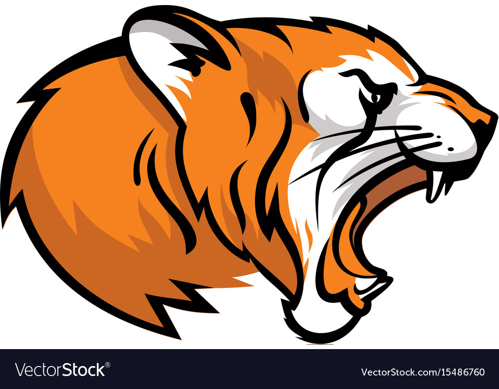 head of a roaring tiger royalty free vector image rh vectorstock com tiger vector art tiger vector file