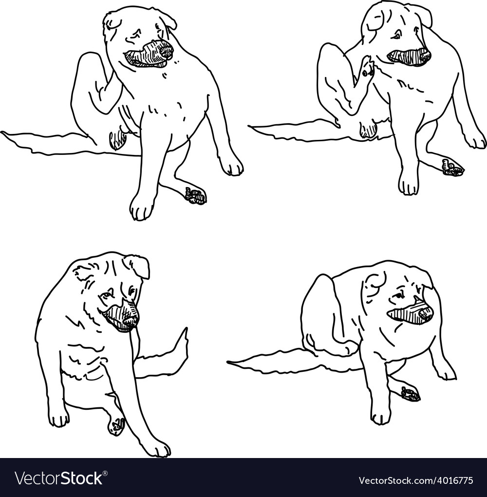 Drawing set of dog scratching itself from itching