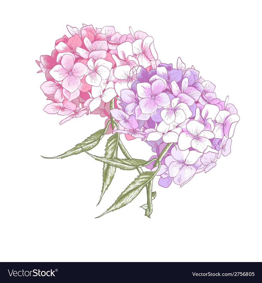 Hydrangea Vintage Botanical