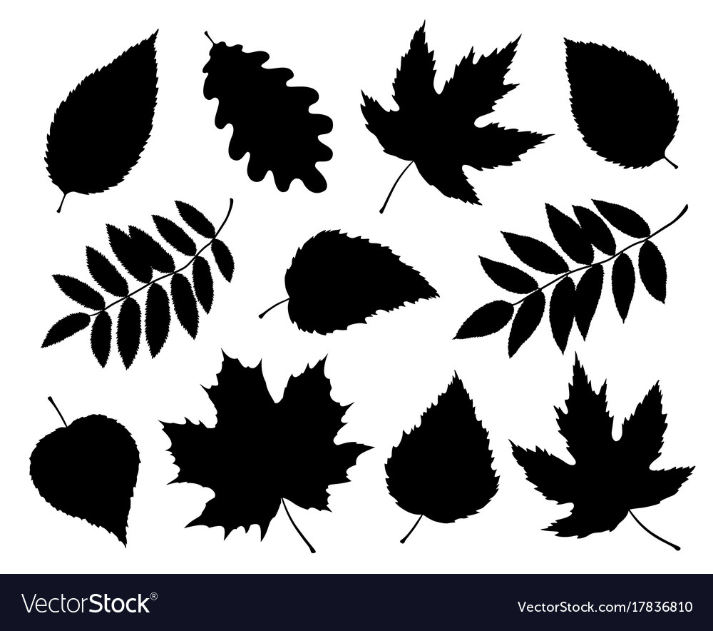 Set of isolated leaves and branches silhouettes