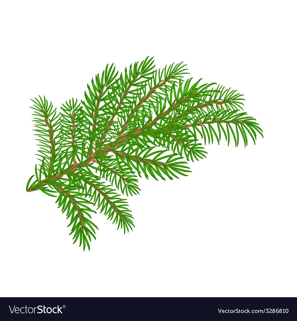 Spruce Christmas Tree Symbol Celebration Vector Image