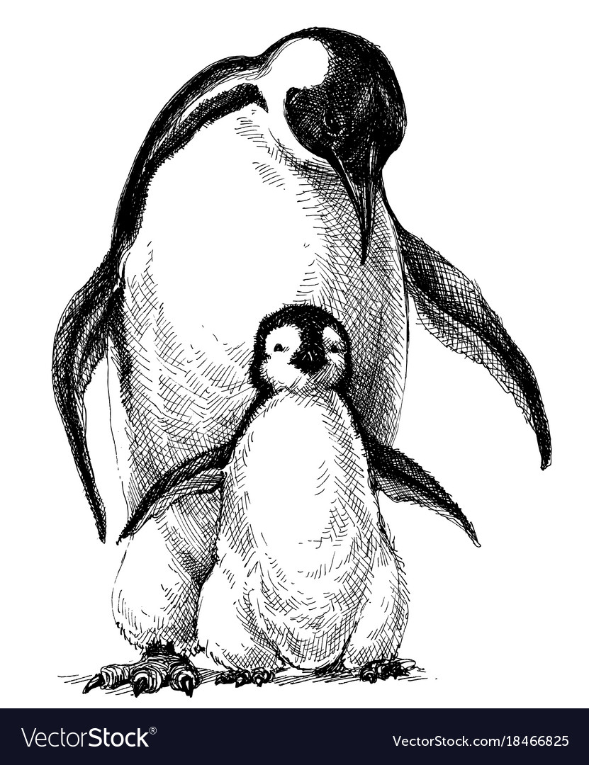 Penguin Pencil Drawing Vector Images 31