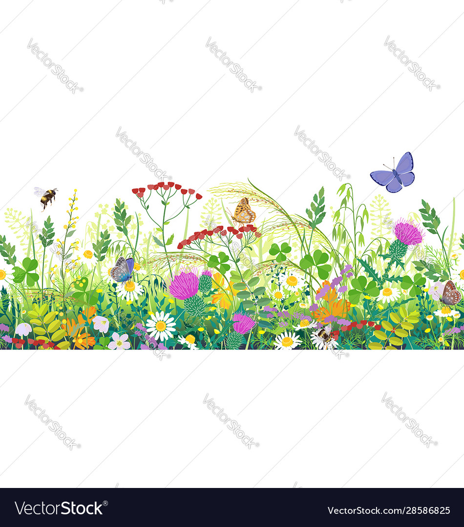Seamless border with summer meadow plants and