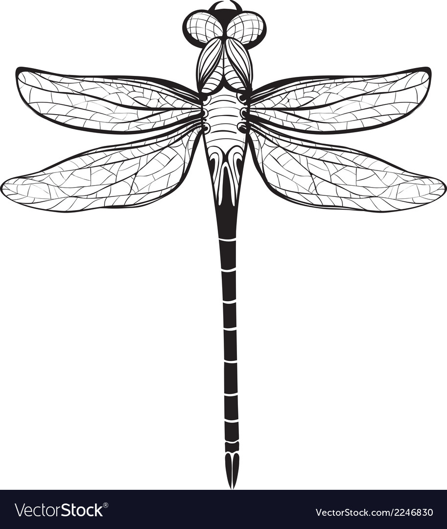 dragonfly insect black inky drawing royalty free vector rh vectorstock com dragonfly vector free download dragonfly vector format