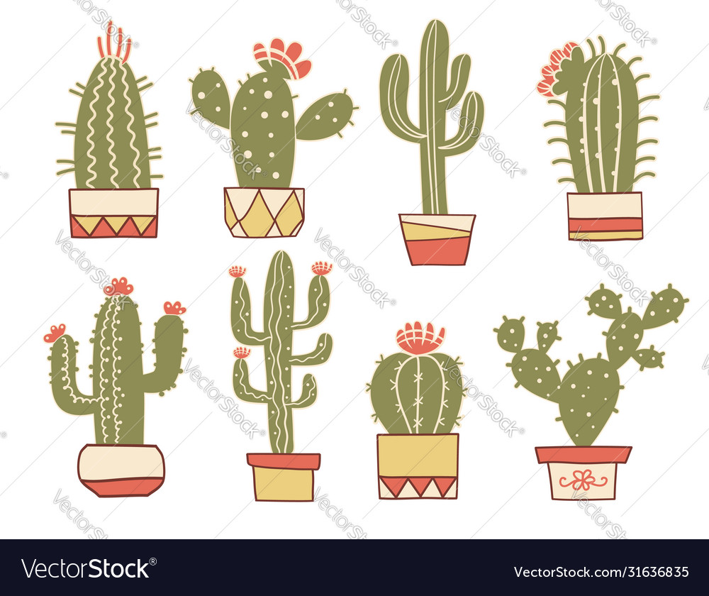 Cactuses floral hand drawn vintage cactuses in