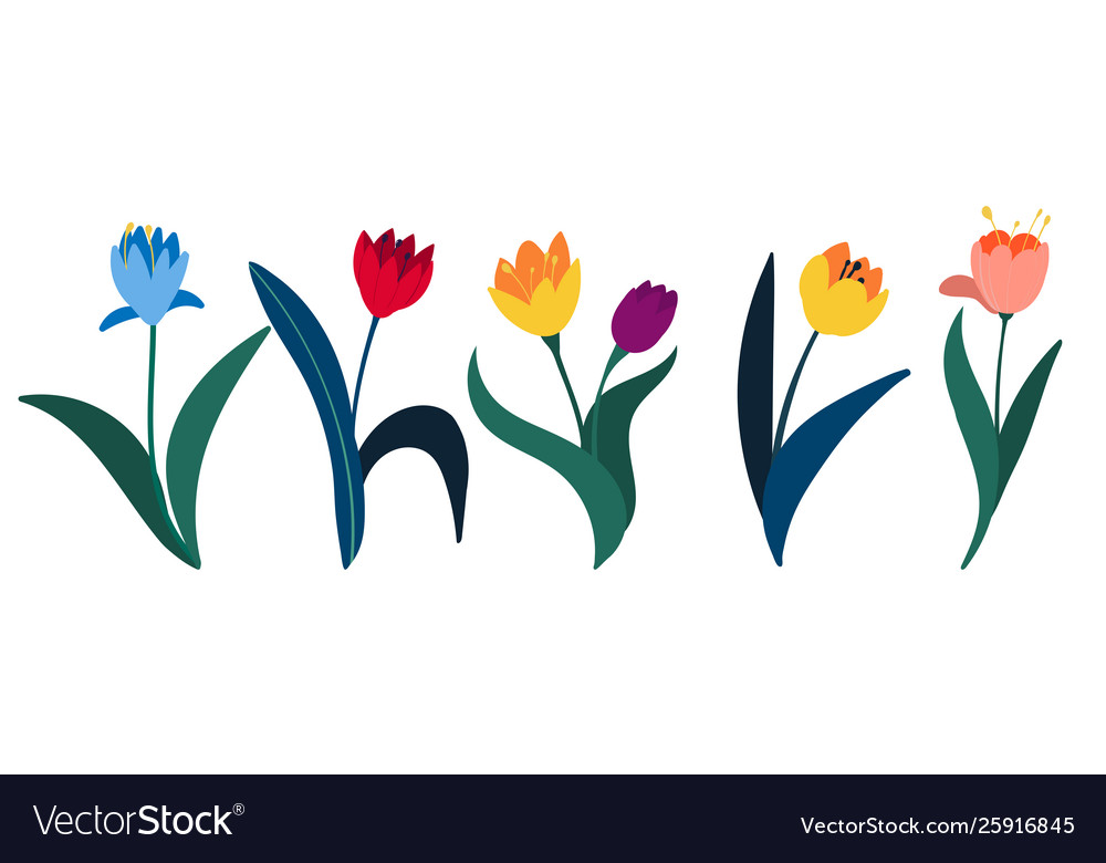 Set colorful tulips in flat style isolated on