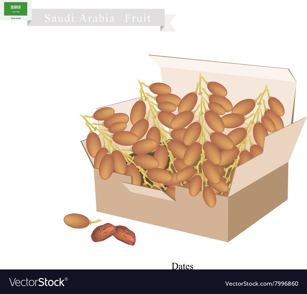 Dates Fruit A Popular Fruit in Saudi Arabia vector image