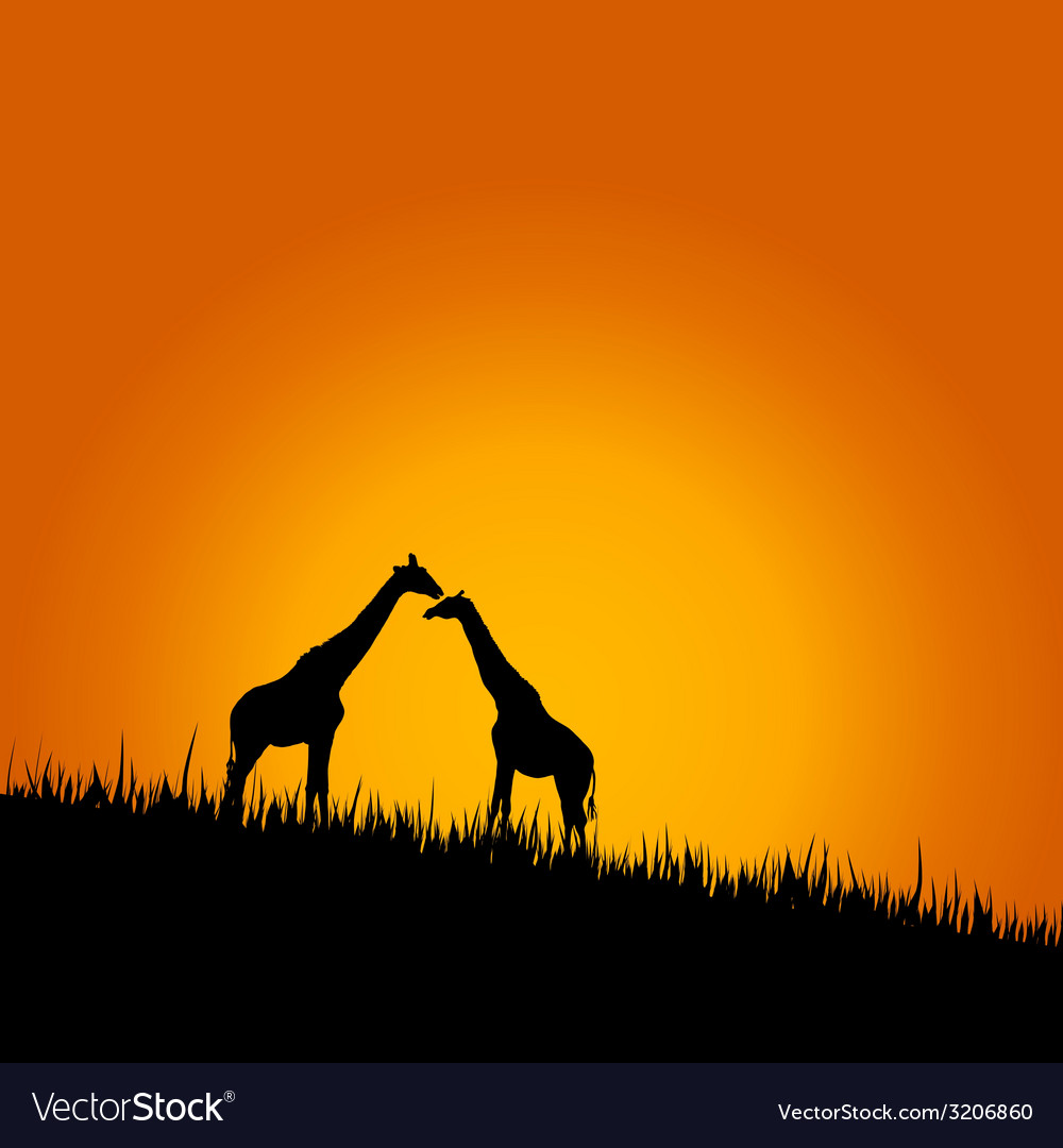 Giraffe in wilderness color
