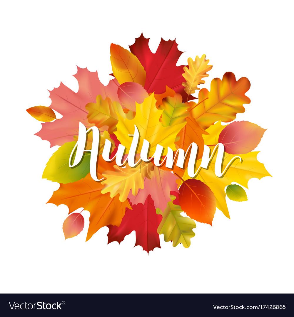Colorful autumn leaves design