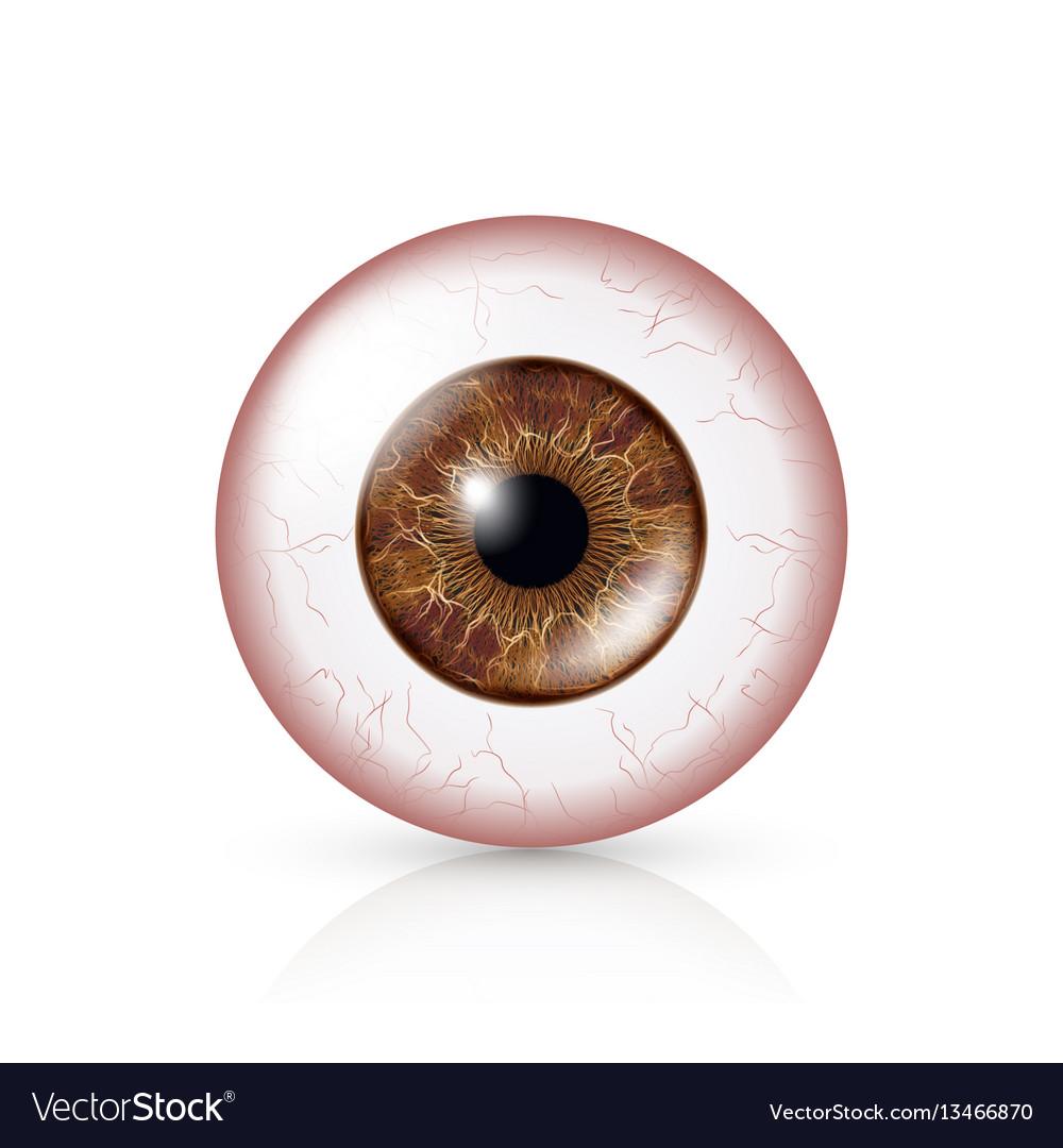 Conjunctivitis red eye human eyeball with