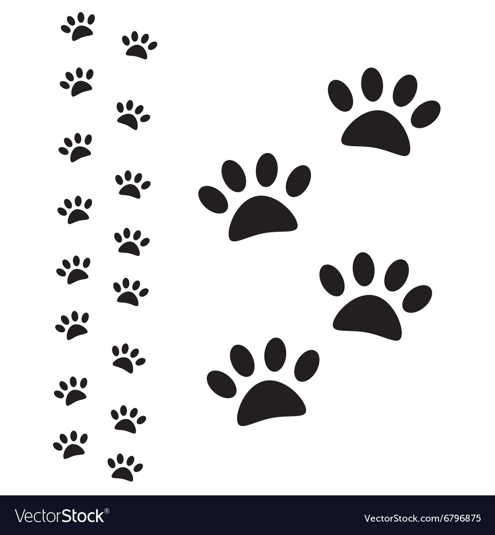 Animal paw path