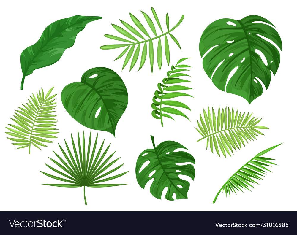 Tropical carved and solid green apart leaves
