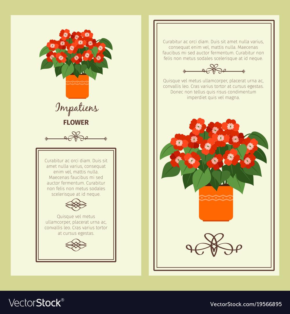 Impatiens flower in pot banners