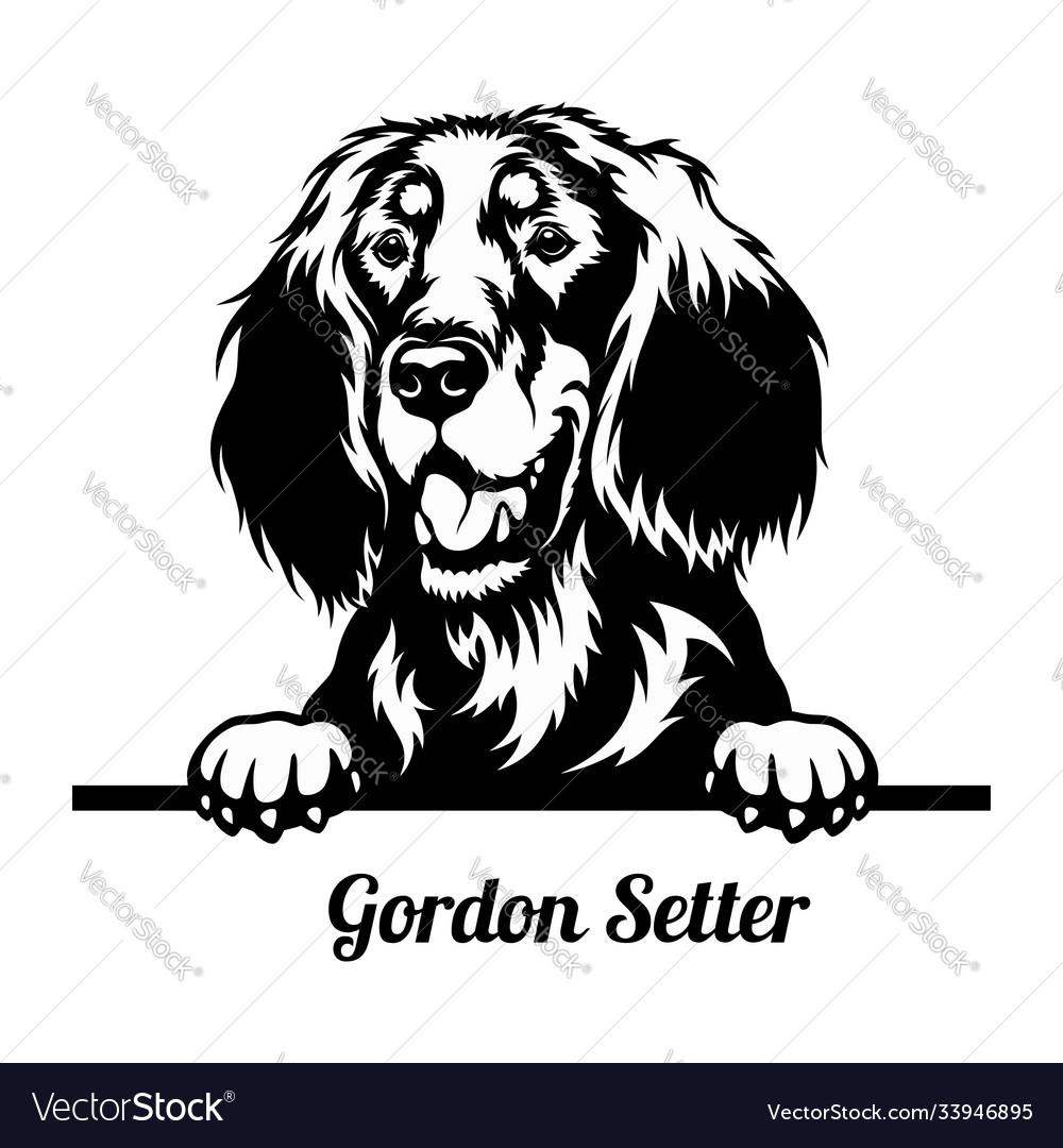 Peeking dog - gordon setter breed - head isolated