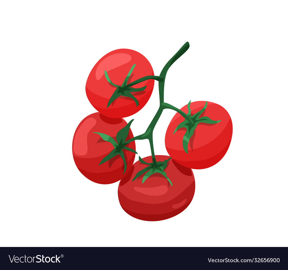 Branch red tomatoes in bright color cartoon