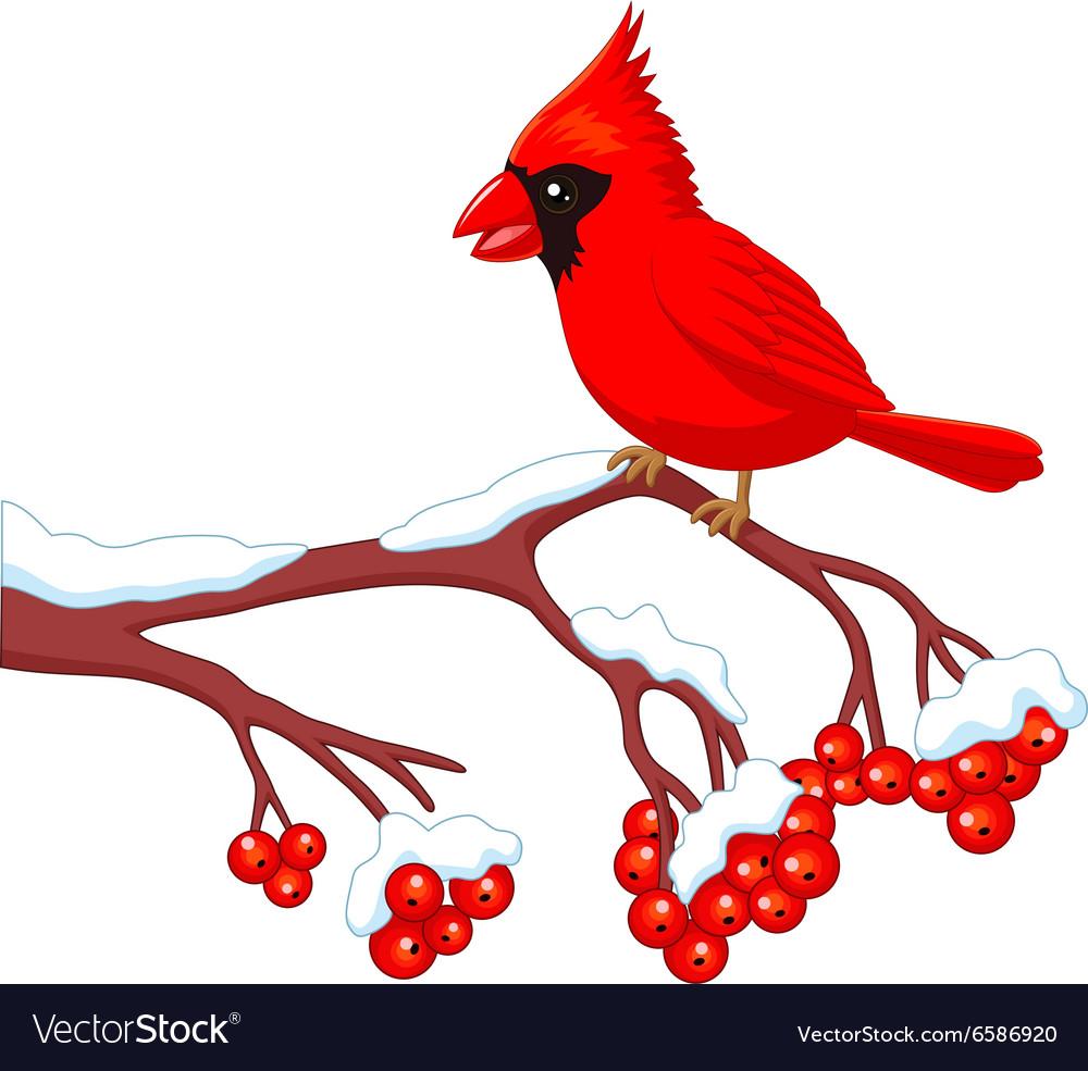 Cartoon Beautiful Cardinal Bird Posing Royalty Free Vector