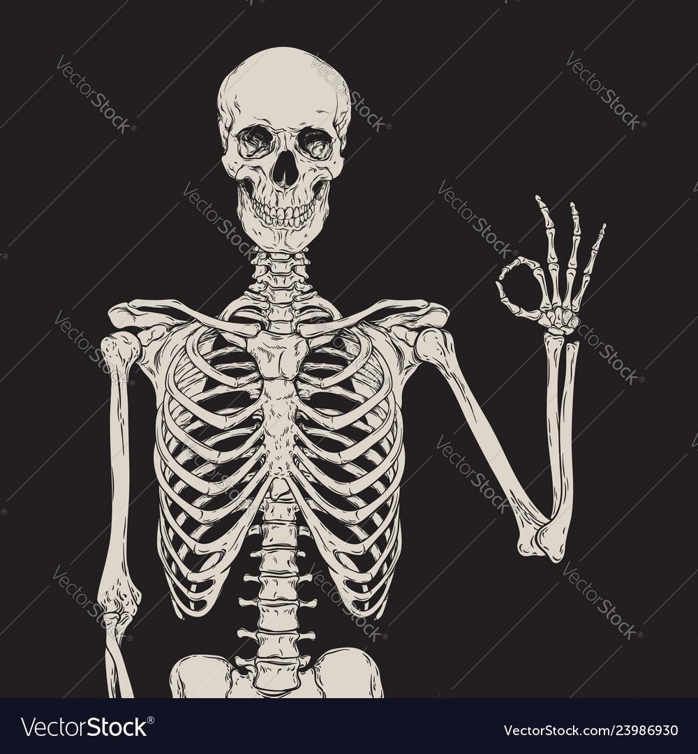 Human skeleton posing isolated over black