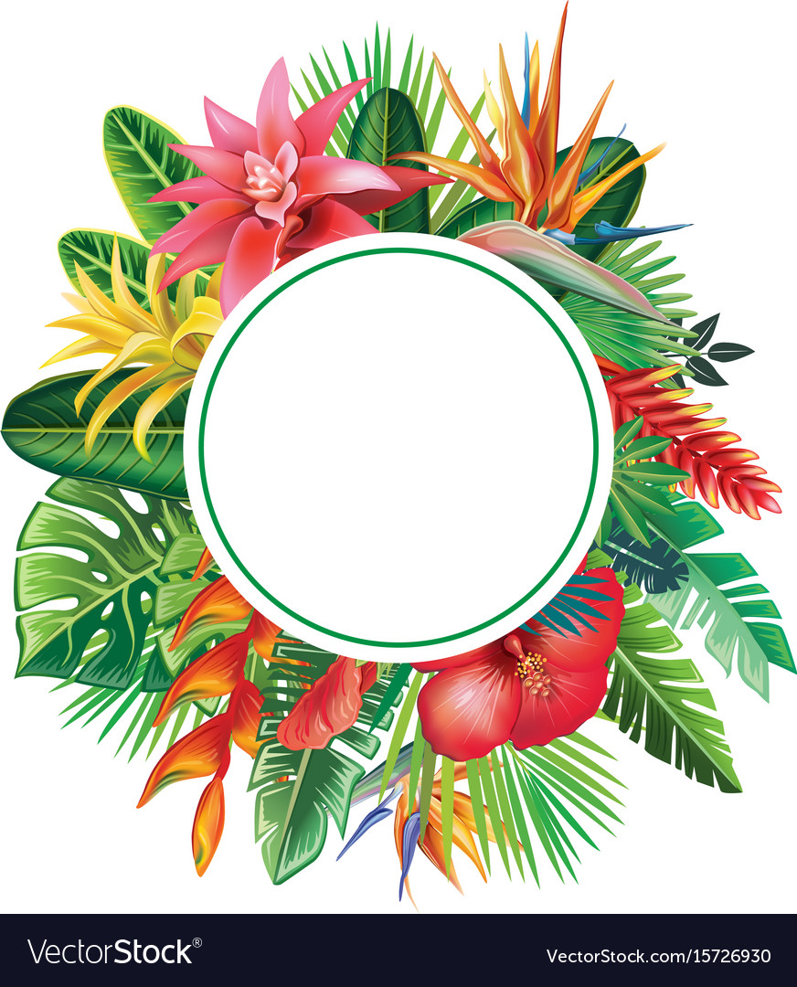 Round frame from tropical plants and flowers vector image