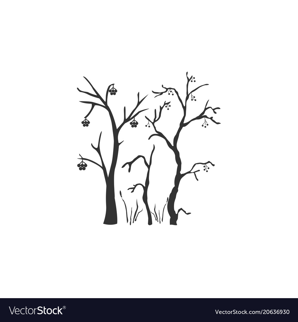 Silhouette of a rowan tree with berries vector image