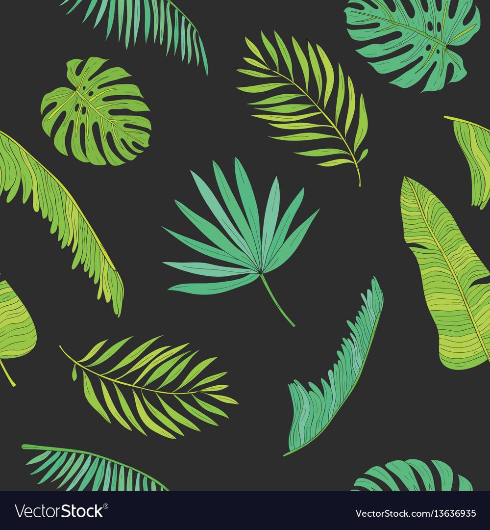 Tropical palm monstera chamaedorea leaves